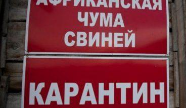 v-orlovskoy-oblasti-vyyavili-novyy-ochag-achs-30542