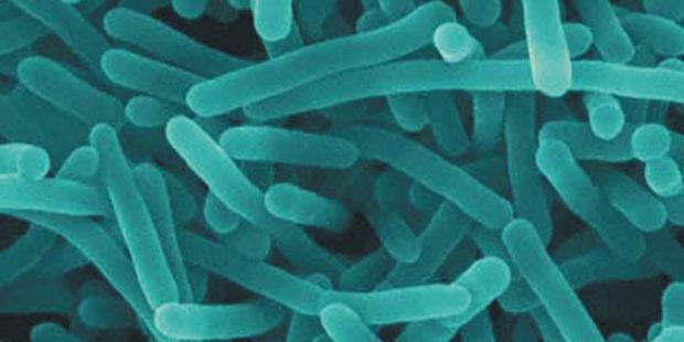 Listeria_Test0