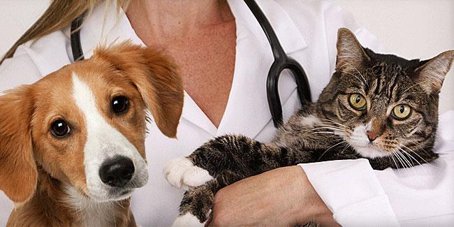h_ua_den_veterinara