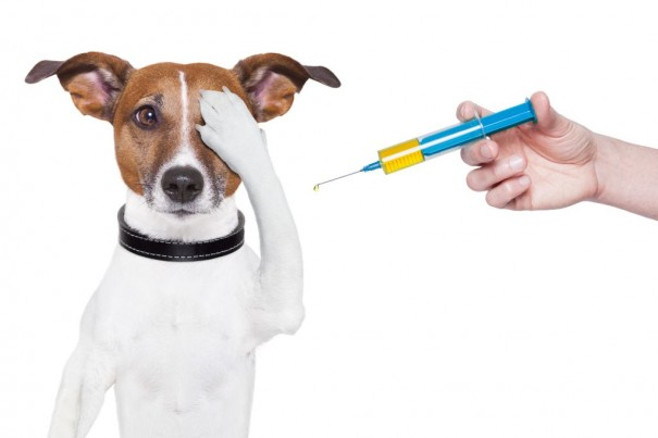 dog-vaccination-vet