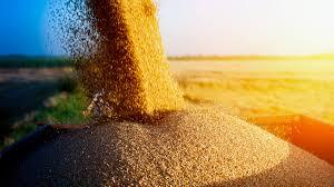 пшени - копия