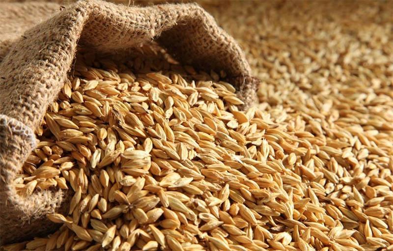 пшениця 1