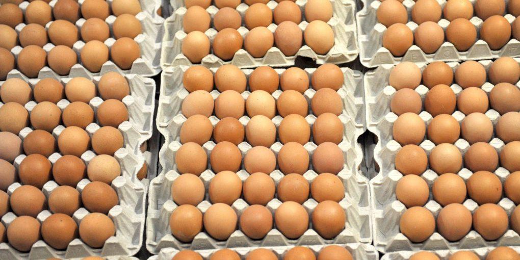 яйцця - копия
