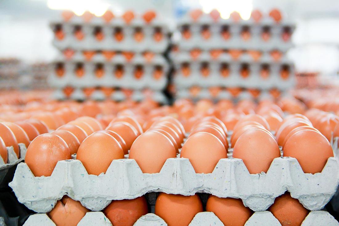 яйця курячі - копия