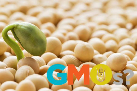 Фото ГМО соя 01