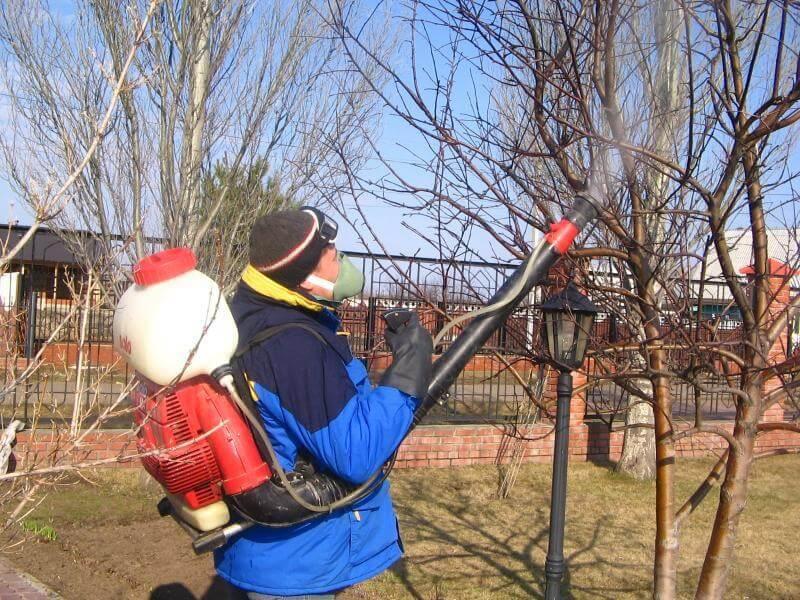 Обприскування дерев восени