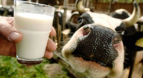 Stop-Drinking-Pasteurized-Milk-600x330