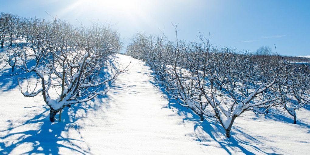 Utaptyvat-sneg-vokrug-derevev-1