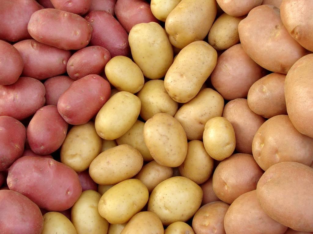 фото картоплі 02