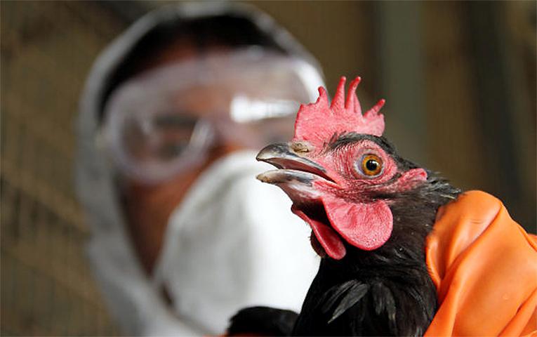 bird-flu2
