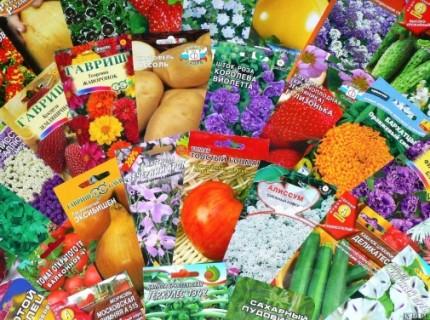 Фото овочів