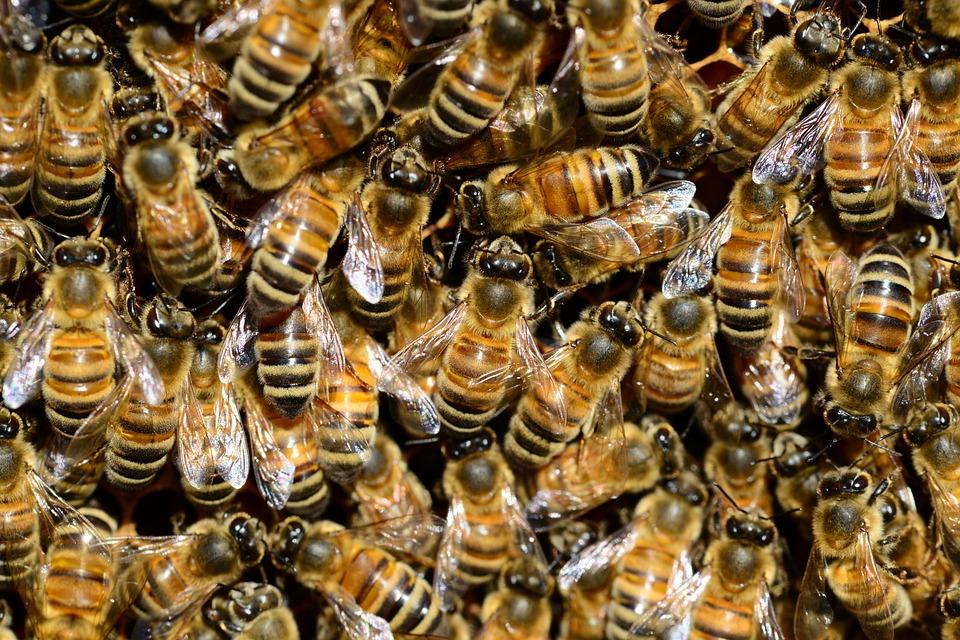 honey-292132_960_720