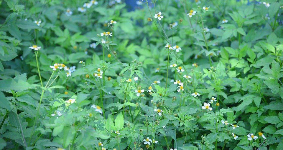 flower-4461991_960_720